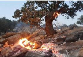 آتش سوزی جنگلهای ارتفاعات