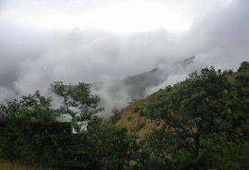 فیلم | درخواست از رئیس قوه قضا برای ورود به پرونده ۵۶۰۰ هکتاری جنگلهای ساری