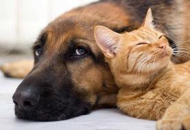 امکان انتقال کرونا از انسان به حیوانات تایید شد | کدام حیوان خانگی بیشتر در معرض خطر است؟