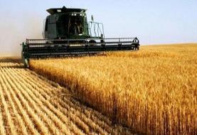 نیاز کشور به ۲۵۰۰ کمباین برنج در سال