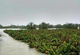 وضعیت کشاورزان سیستان و بلوچستان پس از سیل