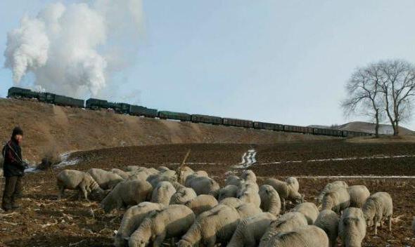 کشف طاعون خیارکی در بیمارستانی در مغولستان داخلی چین