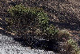 مهار آتشسوزی جنگلهای بلوط بلند چهارمحال و بختیاری