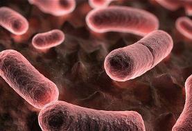 شناسایی بیمار مبتلا به طاعون خیارکی در چین
