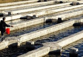 افزایش هزینههای آبزیپروری با حذف ارز دولتی نهادهها