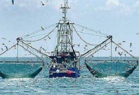 نگرانی صیادان ایرانی به خاطر صید شبانه کشتیهای چینی در خلیج فارس
