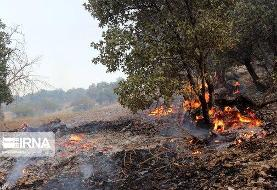آتش دوباره به جان جنگلهای بلوط بلند چهارمحال و بختیاری افتاد