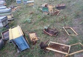 هشدار به زنبورداران خلخالی برای مقابله با حمله خرس قهوهای