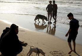 (تصاویر) ممنوعیت سگ گردانی در غزه