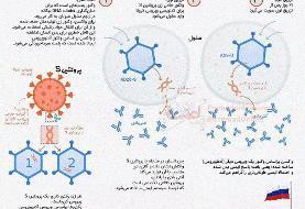 ببینید | واکسن دو مرحلهای روسها چگونه عمل میکند؟