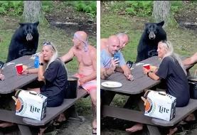 (ویدئو) پیک نیک دوستانه با خرس وحشی!