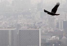 آلودگی طی ۲۴ ساعت گذشته در تهران/دمای ۳۸ درجه هوا در پایتخت