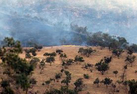 آتشسوزی کوه گردکی باغملک عمدی است