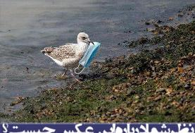 نظر شما درباره این عکس چیست؟/ شکار ماسک توسط مرغ دریایی