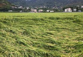 ۶۰ میلیارد تومانی خسارت با بارش شدید باران