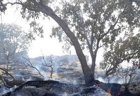 دستگیری عاملان آتشسوزی جنگلهای طرهان و کوهنانی