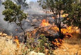 دستگیری عاملان آتشسوزی جنگلهای کوهدشت