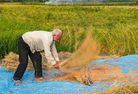(تصاویر) آتش زدن زمینهای کشاورزی