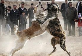 متهمان حیوانآزاری به شلاق محکوم شدند