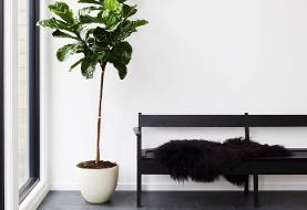 تصاویر | ۵ گیاه مناسب برای نگهداری در آپارتمان | گیاهانی بدون نیاز به نور و رطوبت زیاد