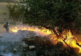 آتشسوزی در بلوط بلند دهدز