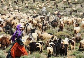 افزایش ۲۵۰۰ تنی تولید گوشت توسط عشایر