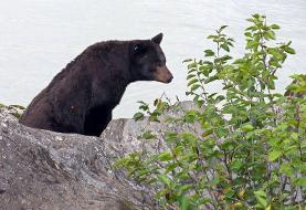 Man fights with bear after it enters home with 10 kids inside, Alaska officials say