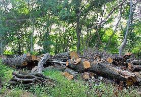 لزوم برداشت ۳۰۰ هزار مترمکعب درختان افتاده هیرکانی