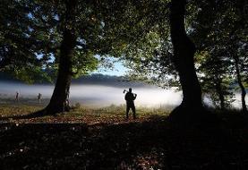 فیلم | نظارت با چشمان بسته و چوب حراج به جنگلهای شمال