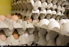 قیمت تخم مرغ رکورد زد/ هرشانه ۳۸ هزار تومان!