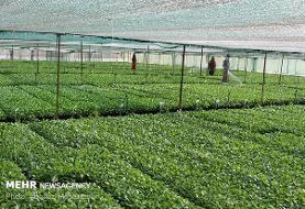 کلیات طرح اصلاح قانون تضمین خرید محصولات کشاورزی تصویب شد