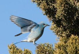 مرگ ناگهانی صدها هزار پرنده مهاجر در آمریکا دانشمندان را مبهوت کرده است