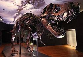 ببینید | حدود قیمت فروش دایناسور ۱۲ متری در حراجی نیویورک مشخص شد!