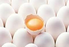 محمودزاده: کاهش قیمت تخم مرغ و کره در گرو تخصیص ارز به نهادههای دامی است