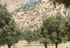 آتش سوزی در جنگلهای منطقه حفاظت شده دنا