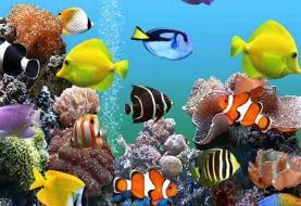 ۵۸۶ هزار قطعه ماهی زینتی به خارج صادر شد