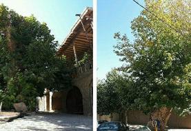 میامی، دیار درختهای ۴۰۰ ساله