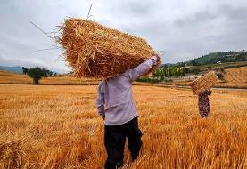قیمت خرید تضمینی گندم برای سال زراعی آینده ۴ هزار تومان تعیین شد