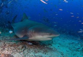 Snorkeler attacked by 10ft bull shark in Florida Keys