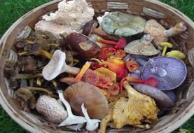 انواع قارچ خوراکی؛ ۲۰ نوع قارچ خوراکی که شاید اسمشان را هم نشنیده باشید