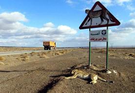 ساخت جاده در مسیر زندگی یوزپلنگهای خراسان منتفی شد