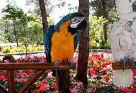 باغ پرندگان ،همان حیوان آزاری است