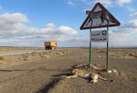 ماجرای ساخت جاده در مسیر زندگی یوزپلنگهای خراسان به کجا رسید؟