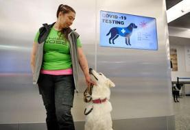 سگی که در ۱۰ ثانیه کرونا را شناسایی میکند   دقیقترین و سریعترین روش تشخیص کرونا؟