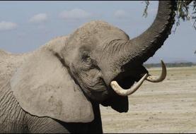 گرمایش زمین چه بر سر فیلهای آفریقای مرکزی آورده؟