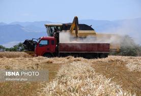 رشد ۱۳ برابری خرید گندم در استان مرکزی