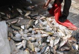 کشف ۱۵ تن ماهی قاچاق در چایپاره