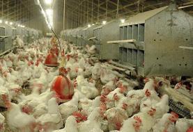 هشدار دامپزشکی سربیشه به دامداران، مرغداران و آبزیپروران