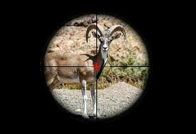 تجارتِ سیاه گوشتِ شکار / نرخ شکار گونههای حیاتوحش در ایران؛ از ٧۰ تا ۳۶۰ میلیون تومان