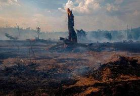 بحران انقراض؛ رهبران جهان میگویند اکنون وقت عمل است